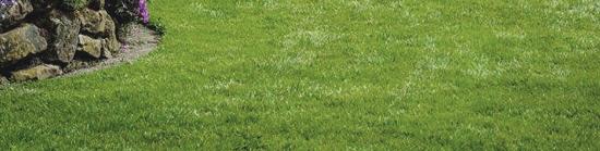 Bild perfekter Rasen